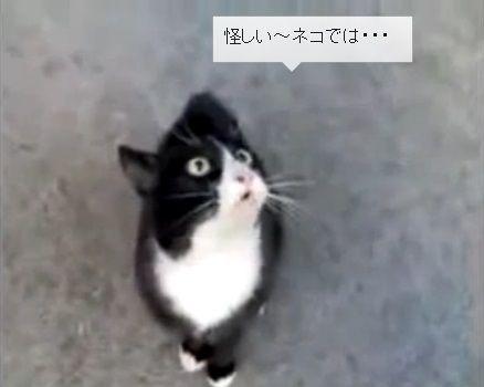 猫 お値段以上05