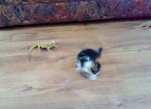 子猫 トカゲ16