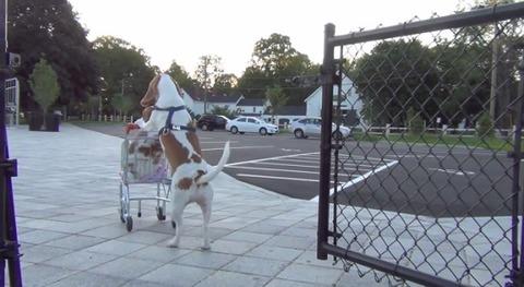 犬 ショッピングカートをさまざまな場所で11