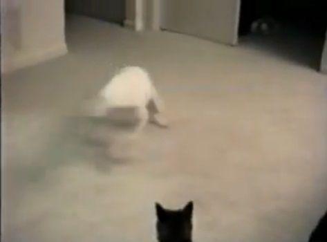犬猫 グルグルと回って誘う犬04