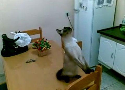 猫 天井の虫が気になる?00