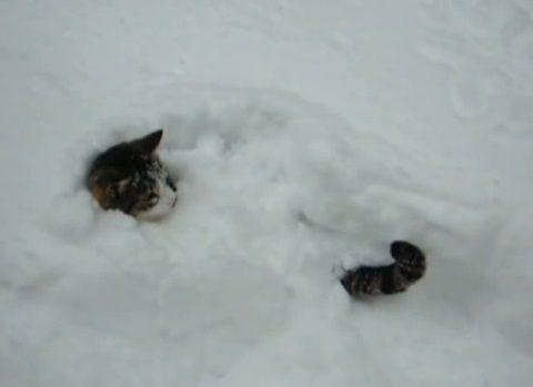 猫は喜び庭駆け回る04