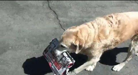 犬 郵便物は箱まで持ってくる01