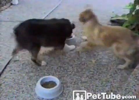 犬 餌入れを行ったり来たり01