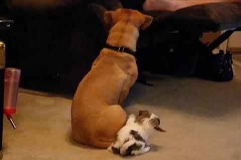 子犬 尻尾をしつこく噛む05