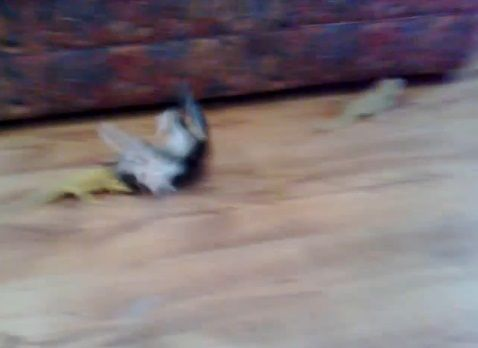 子猫 トカゲ09