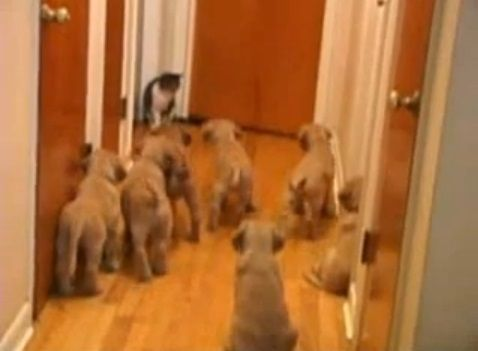犬猫 複数子犬vs猫02