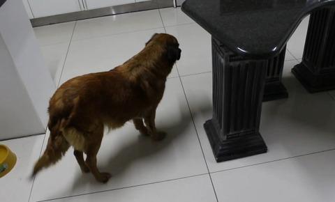 犬 遊びたい相手が無理00