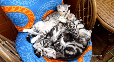 猫 椅子の上でのんびり4匹00