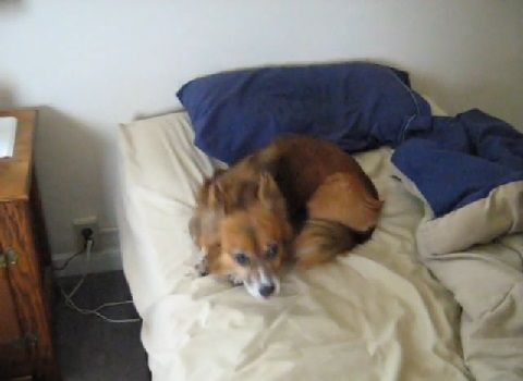 犬 get off my bed00