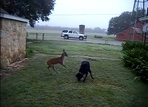 犬 鹿と遊ぶ03