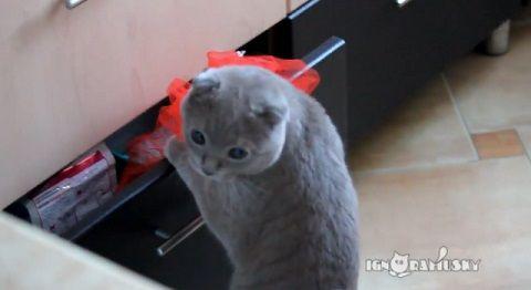 猫 見られてるのに気づいたドロボー猫04