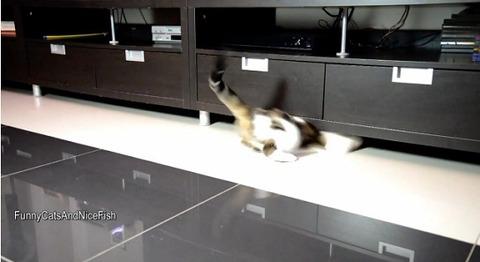 猫 家具の下まで03