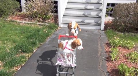 犬 ショッピングカートをさまざまな場所で01