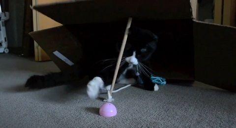 猫 古典的な罠に自ら03