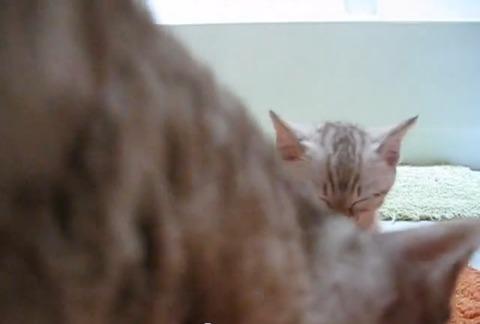 子猫 2匹そろってウトウト02