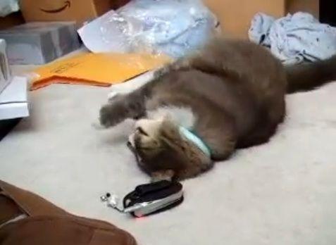 猫 携帯音に07