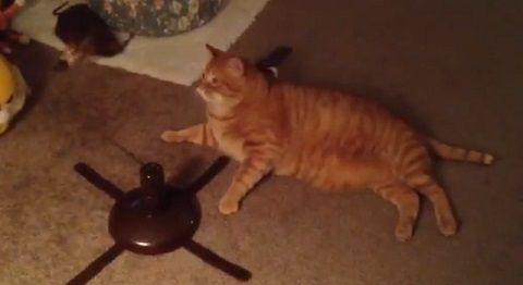 猫 自動猫じゃらしに無関心02