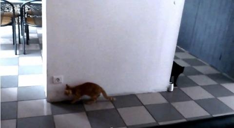 猫が猫を待ち伏せ だけど02