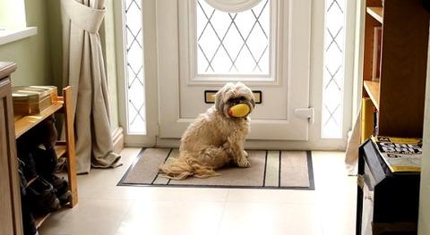 犬 郵便を散らかすシーズー01