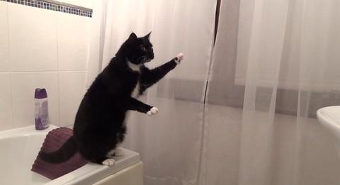 猫 洗面台の鏡に02