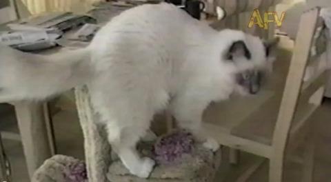 猫 ジャンプして滑って落ちる00