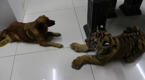 犬 遊びたい相手が無理08