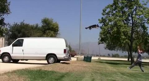 犬 超絶技の連続03