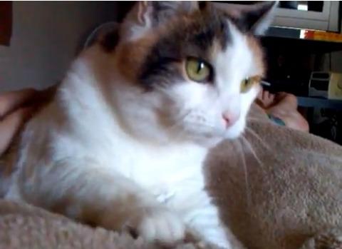 猫 毛布をモミモミ02