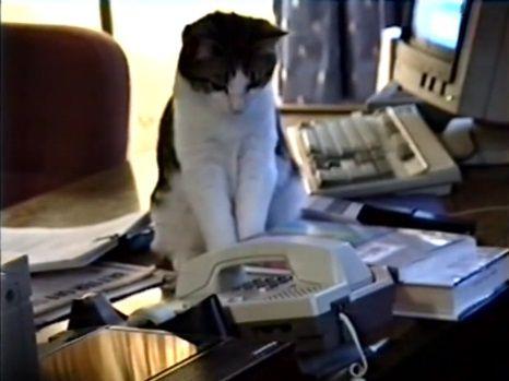 猫 電話に出ない03