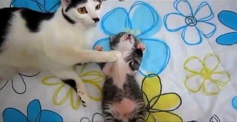 猫 子猫を舐めたり一緒に寝たり00