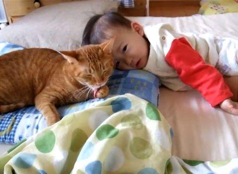 猫 赤ちゃんをペロペロ02