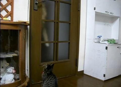 猫 扉を開けたのに閉じられる01