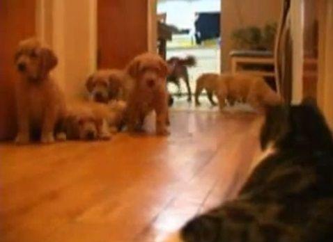 犬猫 複数子犬vs猫05