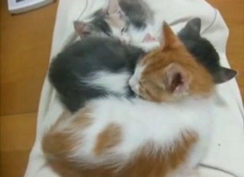 子猫 兄弟3匹でぐっすり?4匹!00