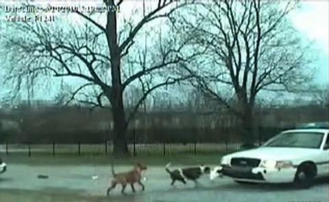 犬 パトカーのバンパー破壊03