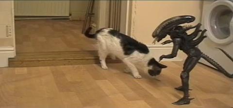 猫 vs Alien06