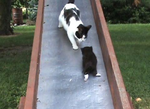 子猫 滑り台でhelp02