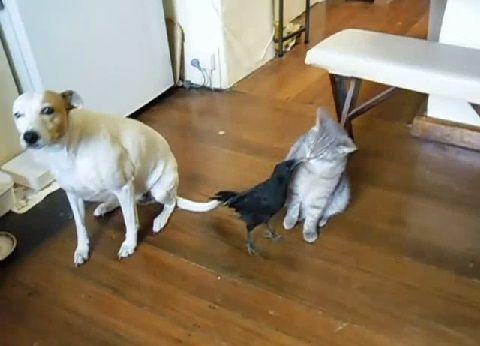 犬猫 カラスに餌をもらう00