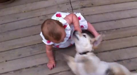 子犬 赤ちゃんにダッシュ>下から甘える01