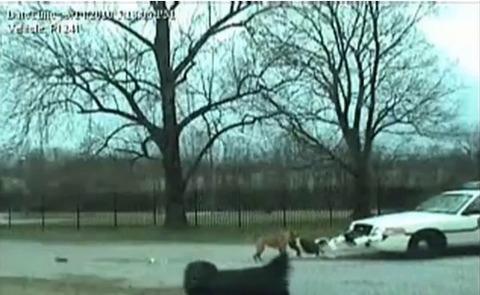 犬 パトカーのバンパー破壊01