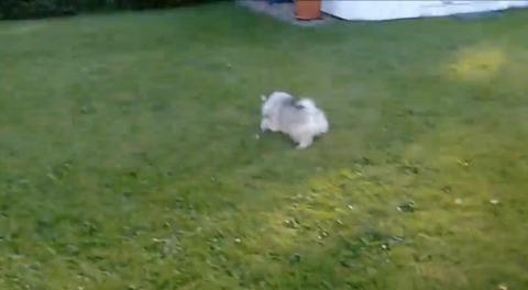 子犬 vsタンポポ00