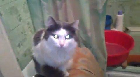 猫 自分でお風呂のドアを閉じる00