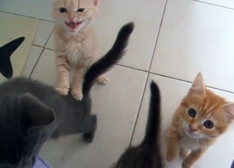 子猫 餌に群がる01