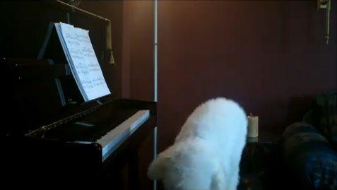 犬 piano 弾語り13