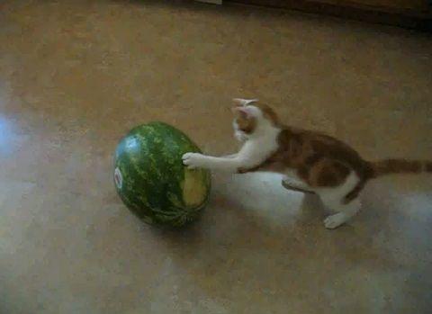 子猫 スイカと戦う子猫00