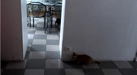 猫が猫を待ち伏せ だけど01