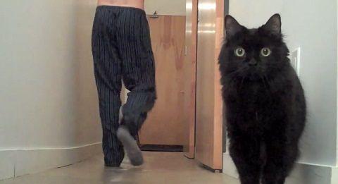 猫 今の風船?02