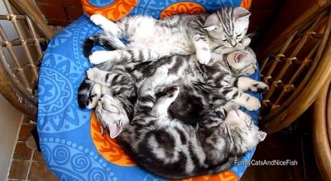 猫 椅子の上でのんびり4匹01