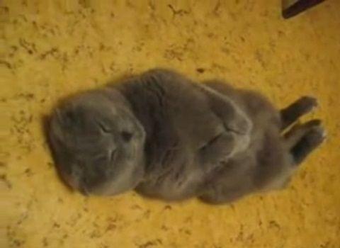 猫 綺麗な姿勢で寝る猫00